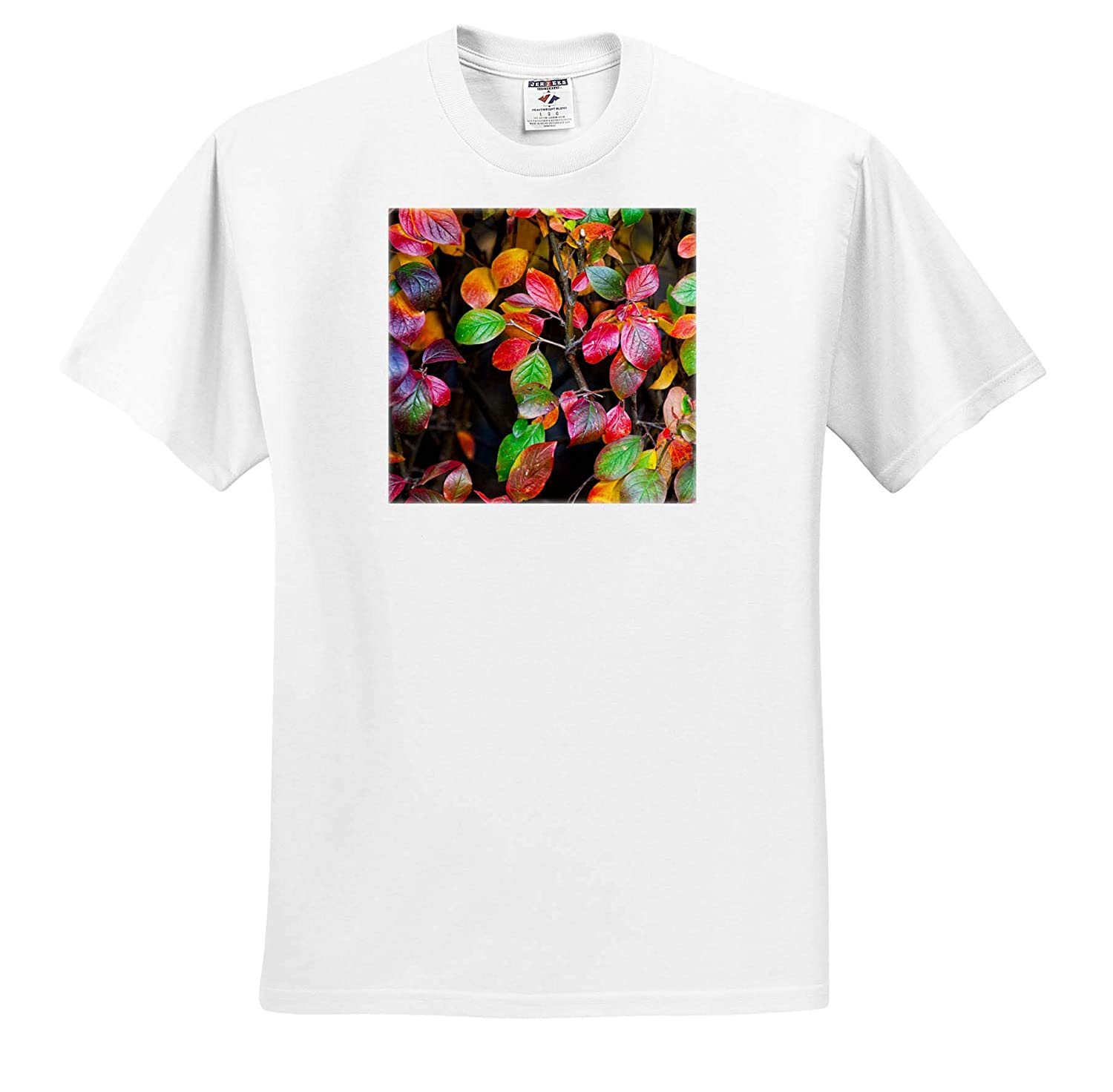 T-Shirts 3dRose Alexis Photography Seasons Autumn Leaves Red and Green cotoneaster Leaves in The Autumn Season