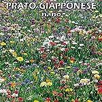 Semi-per-PRATO-FIORITO-GIAPPONESE-NANO-1-Kg-per-circa-40-metri-quadri