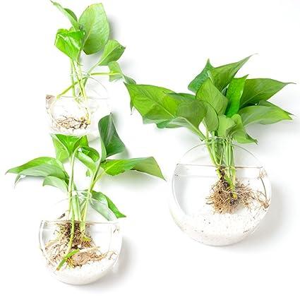 Set de 3 discoid montado en la pared florero terrario de cristal las plantas de interior