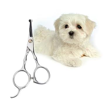 Dabixx Tijeras para el pelo de mascotas, 12,7 cm, acero inoxidable, para cortar perros, gatos o perros: Amazon.es: Hogar
