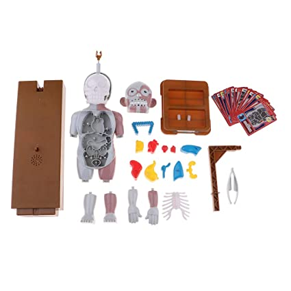 Buy Prettyia Kids Human Body Model Toy with Removable Organs, Family