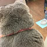 UPRetailer 2Pcs Breakaway Bling Cat Collars with