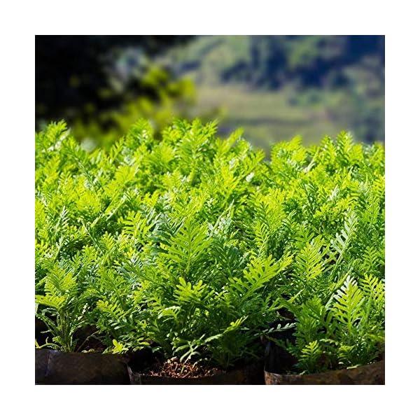 Coltivazione Di Patate Borsa Contenitore Fioriera Fai Da Te Pe Panno Piantatura Orto Giardinaggio Verdura Vaso Da… 2 spesavip