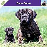 CANE CORSO 2017 - CALENDARIO AFFIXE
