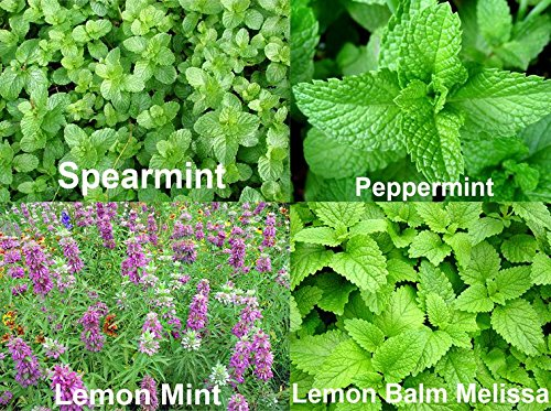 amazon com 1 2 lb mint mix 4varieties peppermint spearmint