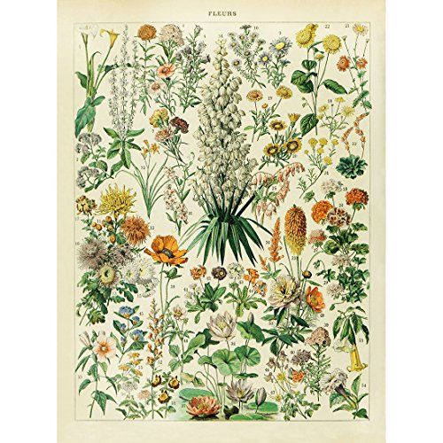 Meishe Art Vintage Poster Print Floral Flowers Botanical Collections Educational Identification Reference Chart Home Wall Decor