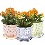 Chive – Liberte, Small Succulent and Cactus Planter Pot, 3″ Flower and Plant Container with Drainage Hole / Saucer, Mini Pot for Indoor / Outdoor Garden Decor,  Bulk Set of 3 (Red, Green, Blue)