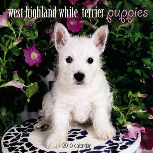 West Highland White Terrier Puppies 2010 Mini - 2010 Terrier Puppies Calendar