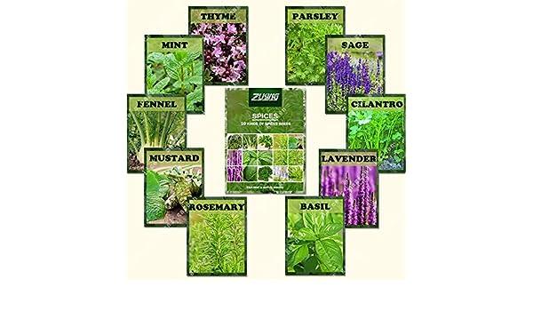 ZLKING 1100 albahaca, lavanda, tomillo rastrero semillas mezcla de ...