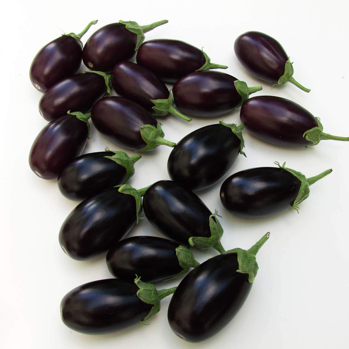 Mini Aubergine     Solanum melongena   Gemüse Pflanzen   4stk.