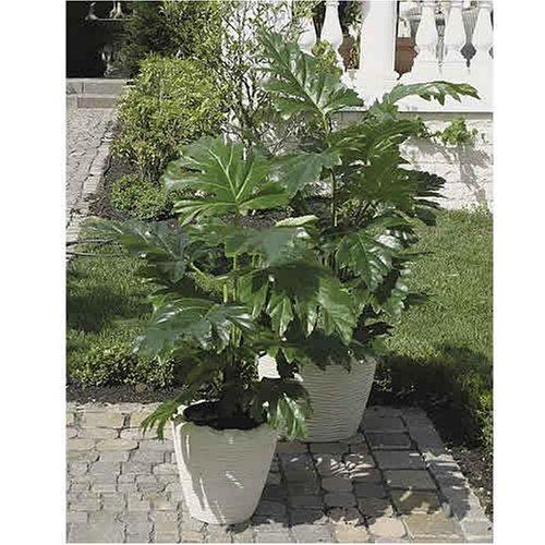 Textile Acanthus Pflanze, getopft, 120cm