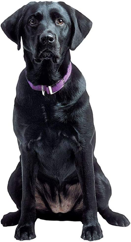 "Paper House Productions 3.75"" x 1.75"" Die-Cut Black Labrador Retriever Dog Shaped Magnet for Refrigerators and Lockers"