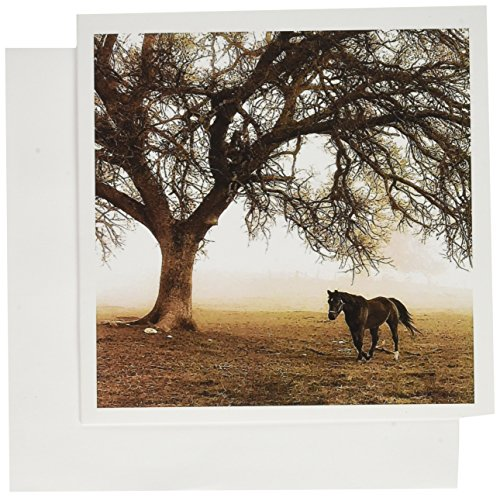 Western Sepia Toned Horse on a Ranch with an Oak Tree - Greeting Cards, 6 x 6 inches, set of 6 (gc_202972_1)