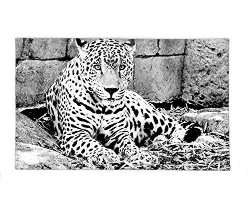 Jaguar Roller Ball Pen - 6