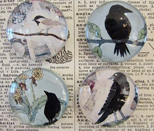 Blackbird Crow Raven Chickadee Magnets, Decorative Magnets, Art Magnets, Refrigerator Magnets, Set of Four ()