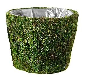 "SuperMoss (55203) Carmel, Fresh Green, 10 Drop-in"""