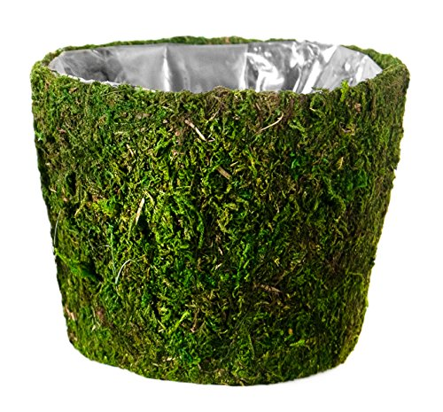 Spanish Hanging Basket - Super Moss (55203) Carmel, Fresh Green, 10 Drop-in