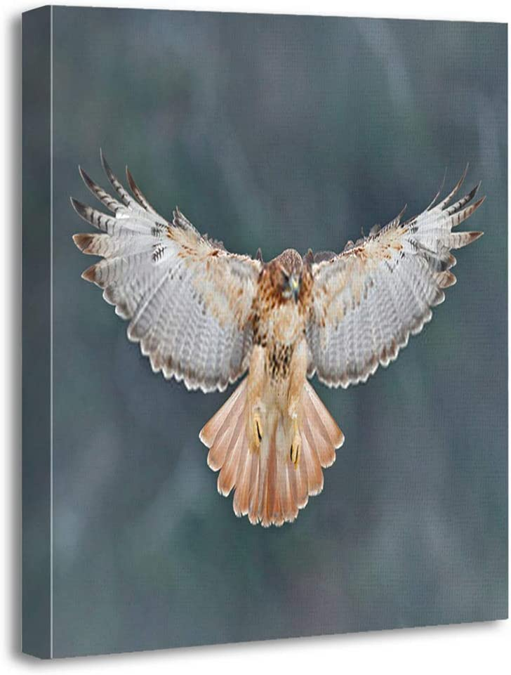 Benxii Canvas Print Flying Bird Prey Red Tailed Hawk Buteo jamaicensis Landing Forest Wildlife Scene Wooden Framed Wall Decor Art Painting Home Artwork Bedroom Living Room Easy to Hang 12x16 Inches