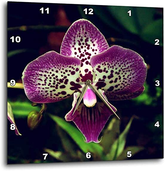 3dRose DPP_182224_1 Close Up View of Purple Orchid Flower Wall Clock, 10 by 10