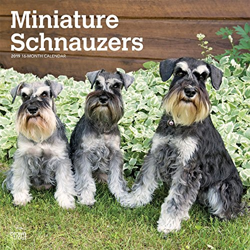Miniature Schnauzers International Edition 2019 12 x 12 Inch Monthly Square Wall Calendar, Animals Small Dog Breeds (Multilingual Edition)