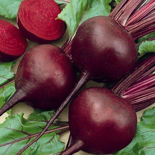 Stonysoil Seed Company Beet Seed Detroit Dark Red ()