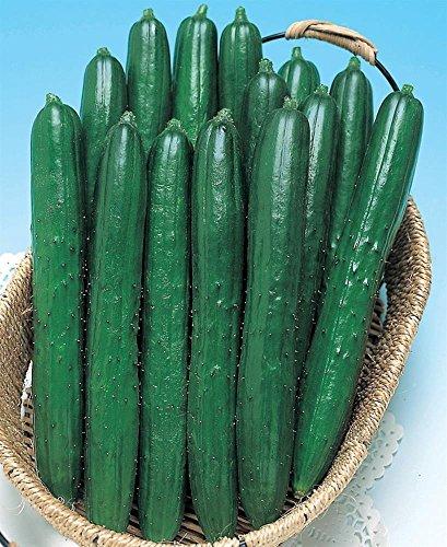 - Summer Dance Hybrid Cucumber, Japanese burpless, Long, Sweet, Non-GMO 20 Seed