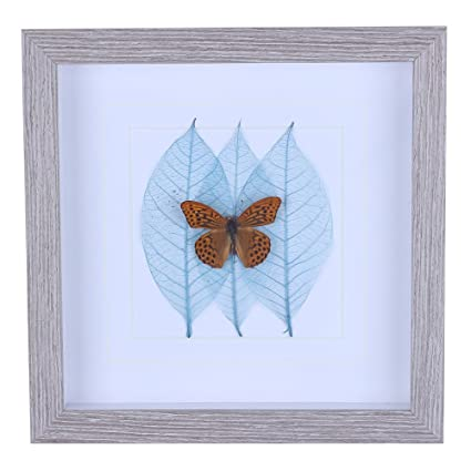 Shadow Box With Real Butterfly Specimen Framed For Wall Art Decoration Of Kids Room Classroom Hotel