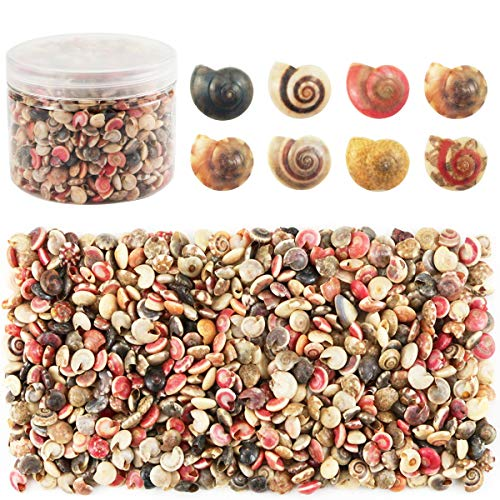 Weoxpr 500pcs Tiny Sea Shells Mixed Ocean Beach Conch Craft Charms for Home Decorations, Beach Theme Party, Candle Making, Wedding Decor, DIY Crafts, Fish Tank and Vase Filler(6-8mm) ()