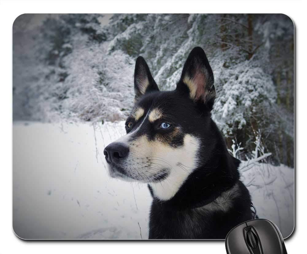 犬用マウスパッド 1122-009 220*180*3 mm B07L4VKGRJ Fl6 300*250*3 mm 300*250*3 mm|Fl6