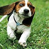 NO BARK DOG COLLAR - FastEngle Rechargeable Dog