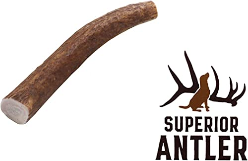 1-Small Whole Elk Antler Single Pack. All Natural Premium Grade A. Antler Chew. L 4-7 Naturally shed, and Made in The USA. NO Odor, NO Mess. Guaranteed Satisfaction. for Dogs 10-25 LBS