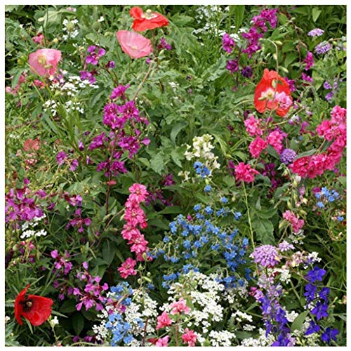 Earthcare Seeds Wildflowers for Shade 10,000 Seeds - Heirloom - Non GMO - Open Pollinated - Annuals and Perennials