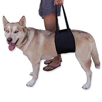 lainin perro apoyo rehabilitación Harness Correa Perro Arnés de ...