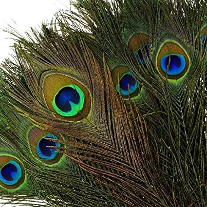 amazon com kayso real natural peacock feathers 100 pack arts rh amazon com peacock feather tattoo peacock feather images