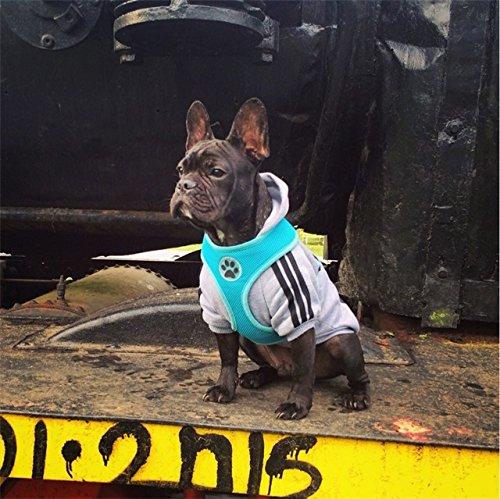 BINGPET BB5001 Soft Mesh Dog Harness Pet Walking Vest Puppy Padded Harnesses Adjustable, Blue Large by BINGPET (Image #4)
