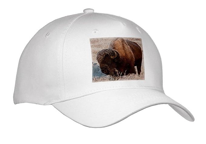 Amazon com: Danita Delimont - Bison - Wyoming, Yellowstone National