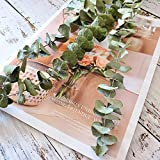 Beau Jour Dried Real Eucalyptus Branches 12