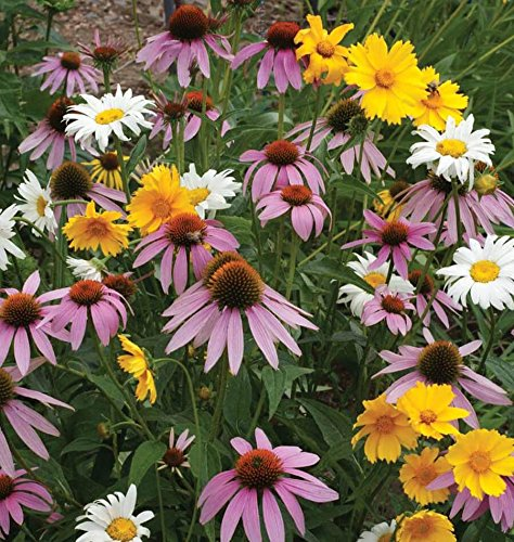 Non GMO Bulk All Perennial Wildflower Seed Mix (1 LB) 375,000 Seeds