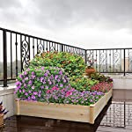 YAHEETECH Wood Raised Garden Bed Boxes Kit Elevated Flower Bed Planter Box for Vegetables Natural Wood 92.3 x 47.4 x 10… 14 BUILD YOUR DREAM GARDEN - This garden bed planter is separated into two growing area for different plants or planting methods. The baffle can be removed to create a bigger growing area if needed. You can get several garden beds to design and build your own dream garden. USEFUL & PRACTICAL - With this helpful planter, you can cultivate plants like vegetable, flowers, herbs in your patio, yard, garden and greenhouse, and make them more convenient to manage. SELECTED MATERIAL - Our raised garden bed is made of no paint, non-toxic fir wood. The boards are only sanded to prevent any undesired injury caused by wood splinters. 1.5cm/ 0.6'' thick solid wood boards are joined and fixed by screws, making it a durable piece for your long-term use.