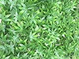 LivingComfort Artificial Decorative Fence, Suitable for Both Outdoor or Indoor use, Garden, Backyard , Maple Green Artificial Hedge 20 x 20 Inch (12 pack)