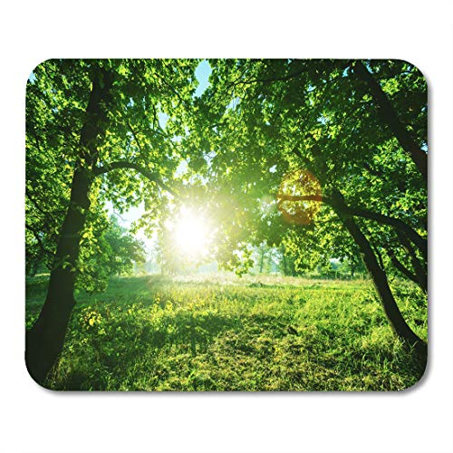 Semtomn Mouse Pad Green Rain Forest in Vancouver Island British Columbia Canada Mousepad 9.8