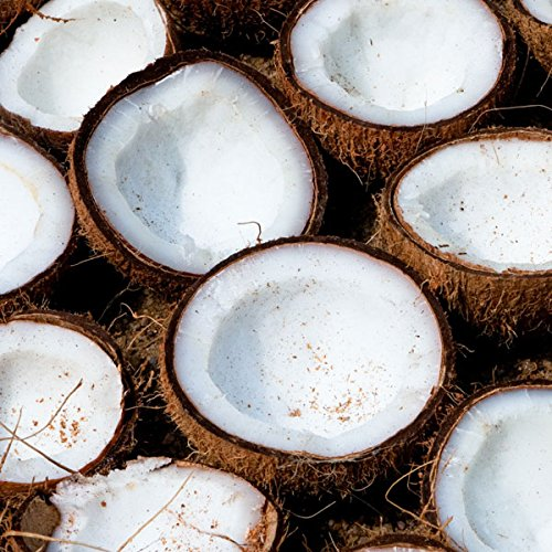 Fragrance Oil Coconut 50ml Scented Fragrance for Candle Making, Soap Making & Bath Bombs Cosy Owl