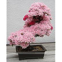 Bonsai Tree japanese sakura seeds rare Japanese cherry Blossoms flowers seeds in bonsai,pink Prunus Serrulata15 seeds/pack