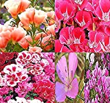 BIG PACK - (40,000+) CLARKIA GODETIA Crazy Rainbow Mix - Clarkia amoena Flower Seeds By MySeeds.Co (BIG PACK - Godetia Crazy Rainbow Mix)