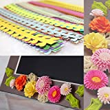 Bilipala Paper Quilling DIY Flowers Petal Shapes