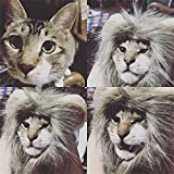 Cat and Small Dog Lion Mane Wig Costume Adorable Cute Fancy Dress for Christmas Easter Festival Party Activity (grey)