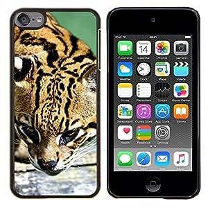 Cubierta protectora del caso de Shell Plástico || Apple iPod Touch 6 6th Touch6 || Ocelot felino cazador lindo gato grande salvaje @XPTECH