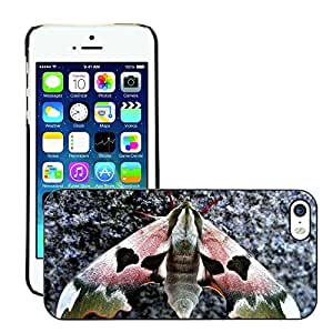 GoGoMobile Slim Protector Hard Shell Cover Case // M00119265 Owls Butterfly Nature Insect Animals // Apple iPhone 5 5S 5G