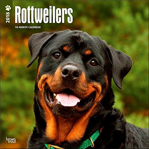 Rottweilers Calendar 2018 - Deluxe Rottweiler Wall Calendar (12x12)