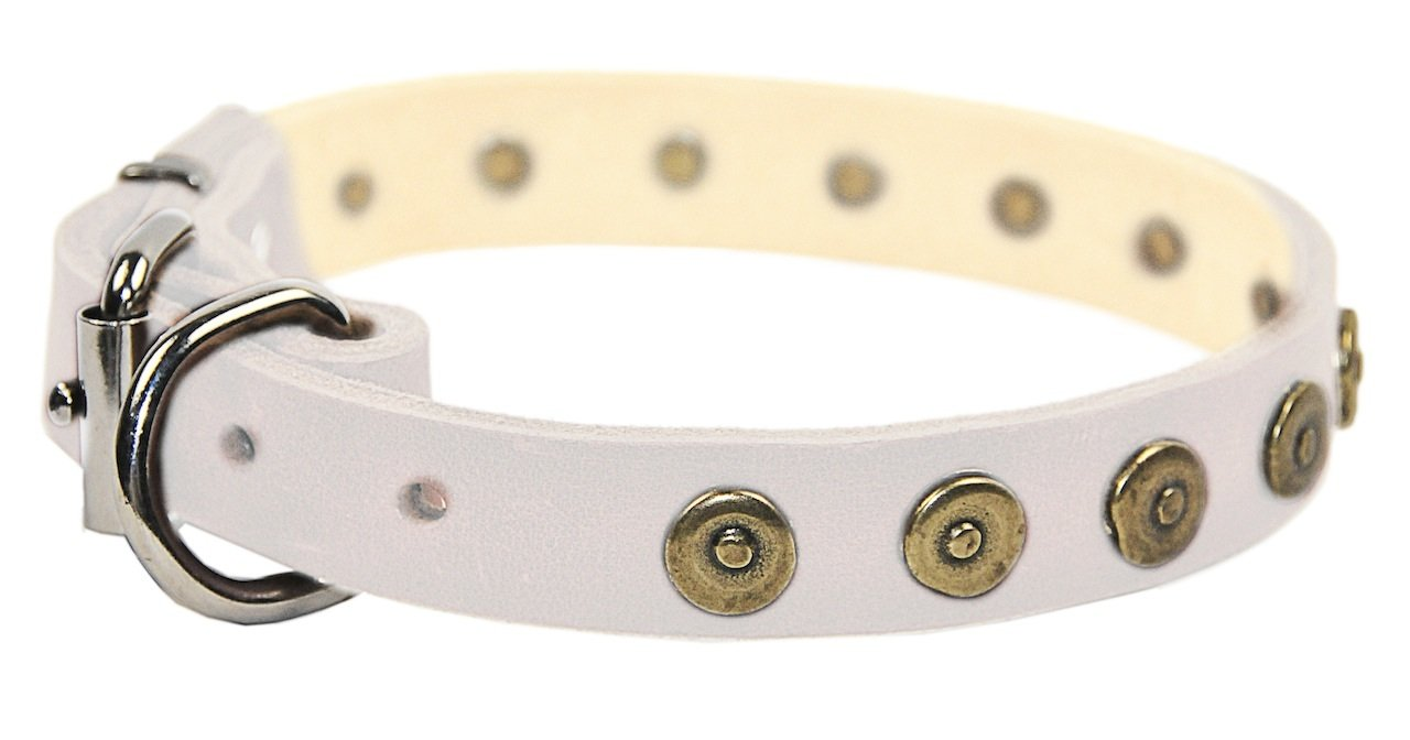 Dean & Tyler 14-Inch by 1-Inch Dot Matrix Leather Dog Collar with Solid Brass Circles, Fits Neck 12-Inch to 16-Inch, White